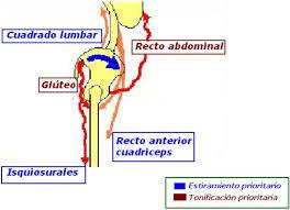 isquiosurales